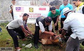 Korban Aidil Adha di Aceh