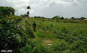 Pertanian Asas Pembangunan Modal Insan